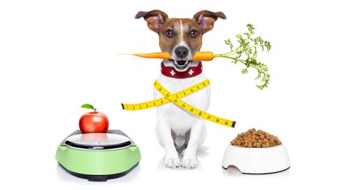 Nourriture diététique pour chien & chat