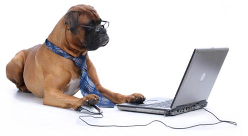 Online dierenapotheek Medpets.nl viert 200.000ste order