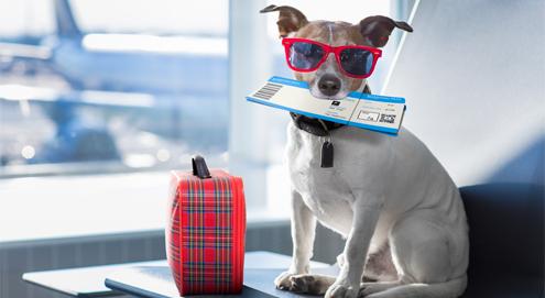 Schützen Sie Ihren Hund oder Ihre Katze gegen 'Urlaubswürmer'