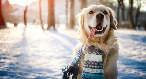 Préparez votre chien à l'hiver