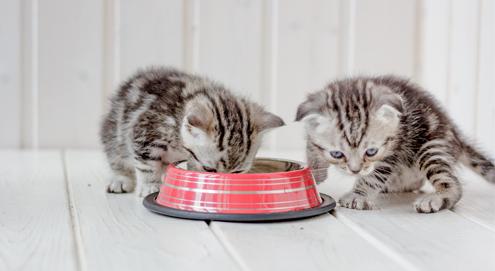 Prins legt uit: Van moedermelk tot brokje: Voeding voor kittens