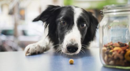Recettes de friandises pour chiens