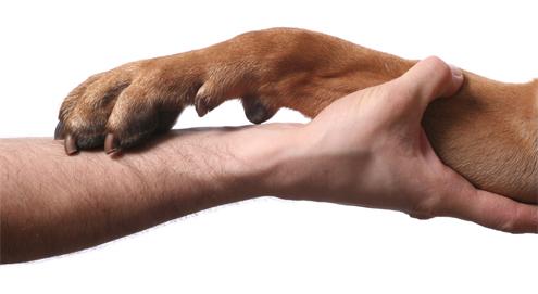 Reconnaître et traiter l'arthrose chez le chien, le chat et le cheval