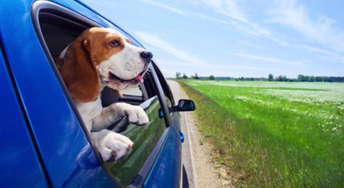 Reizen en op vakantie met en zonder huisdier