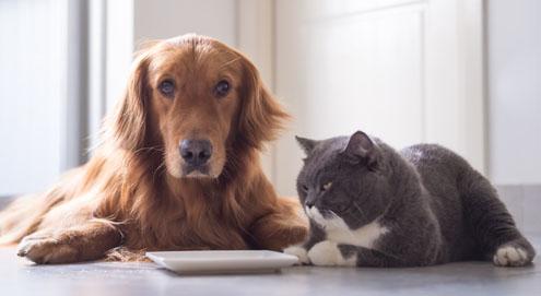 Royal Canin Alternatives