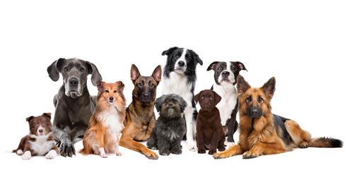 Royal Canin legt uit: Waarom is er unieke voeding voor jouw hondenras?