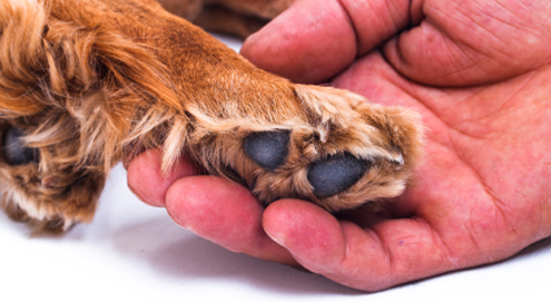 Skin conditions in dogs and cats