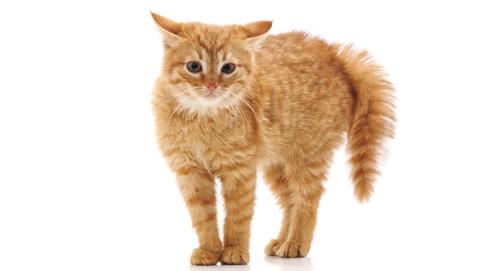 Socialisatie van kittens