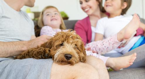 Socialisatie van pups