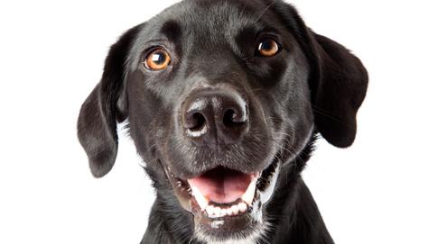 Soins dentaires chez le chien
