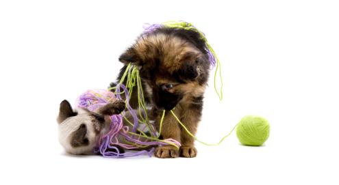 Speelgoed voor hond, kat en paard