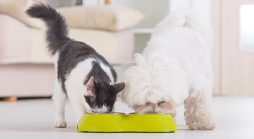 The way to your pet's heart is through its stomach... Which food should I choose?