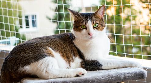 Tipps, um Ihren Balkon katzensicher zu machen