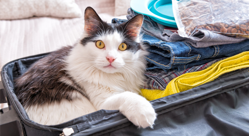Tips for leaving your pet at home while going on a holiday