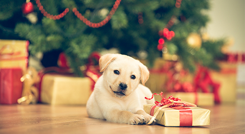 Tips voor de kerstdagen