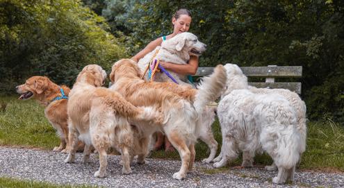 Top 10 grote hondenrassen