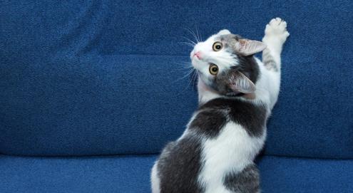 Unerwünschtes Kratzverhalten: Hilfe, meine Katze kratzt an Möbeln, Tapeten oder Teppichen