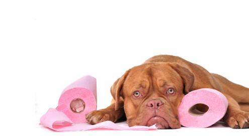 Verdauungsstörungen beim Hund