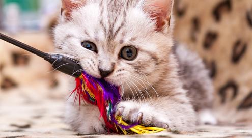Vermaak uw huisdier, de top 5 populairste honden- en kattenspeeltjes