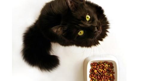 Voeding en vachtverzorging van allergische honden en katten
