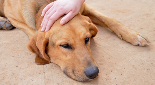 Was ist giftig für Ihr Haustier?