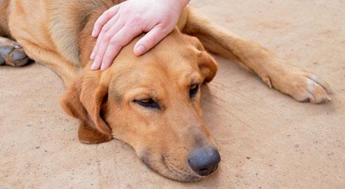 Wat is giftig voor je huisdier?