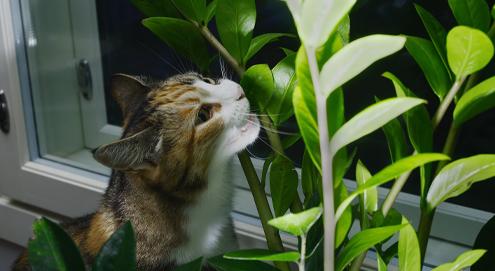 Welke planten zijn giftig voor je kat?