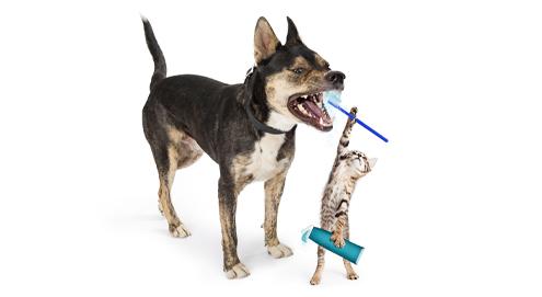 Wie kann ein Dental-Futter zur Zahngesundheit beitragen?