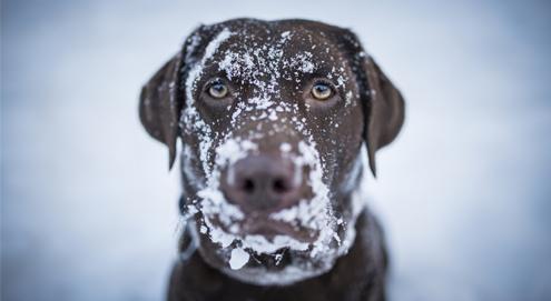 Wist u dat: ''Strooizout dodelijk is voor honden''