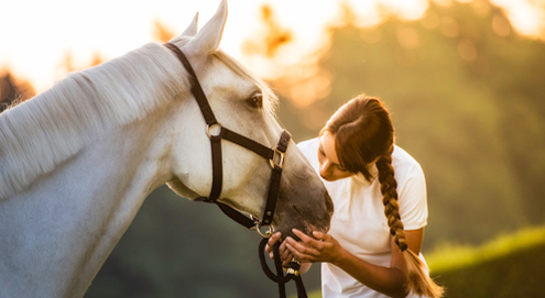 Worming treatment in horses