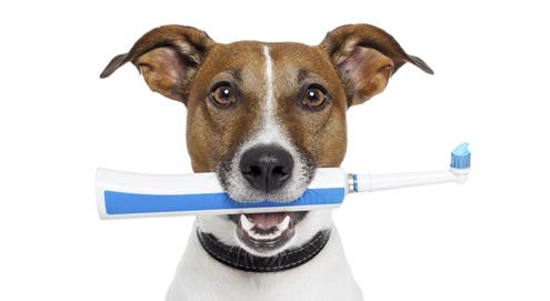 Your dog's teeth