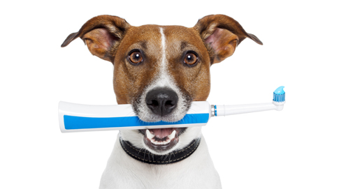 Zahnprobleme bei Hunden