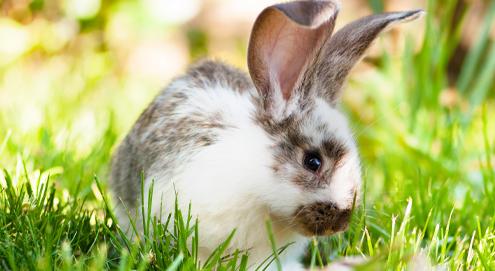 Zindelijk maken van je konijn