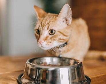 Cat Food - Snacks