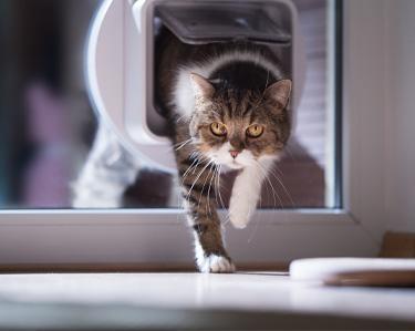 Katzenklappen und Schutznetzen