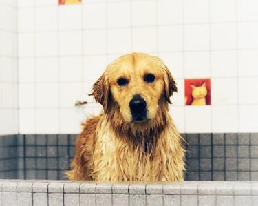 Pflegeprodukte für Ihren Hund