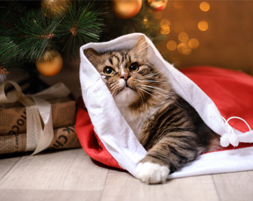 Wide range in Christmas pet products