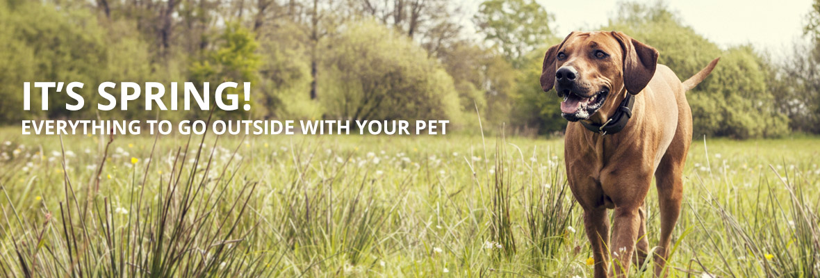 Supplies & Accessories for your dog