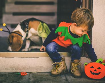 Halloween pour Animaux