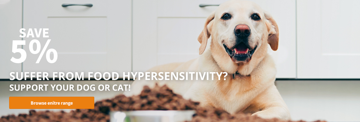 hypersensitivity in dogs and cats