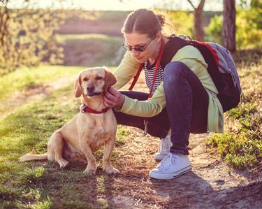 Traitement anti-puces et anti-tiques pour animaux domestiques