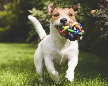 Speelgoed voor Honden