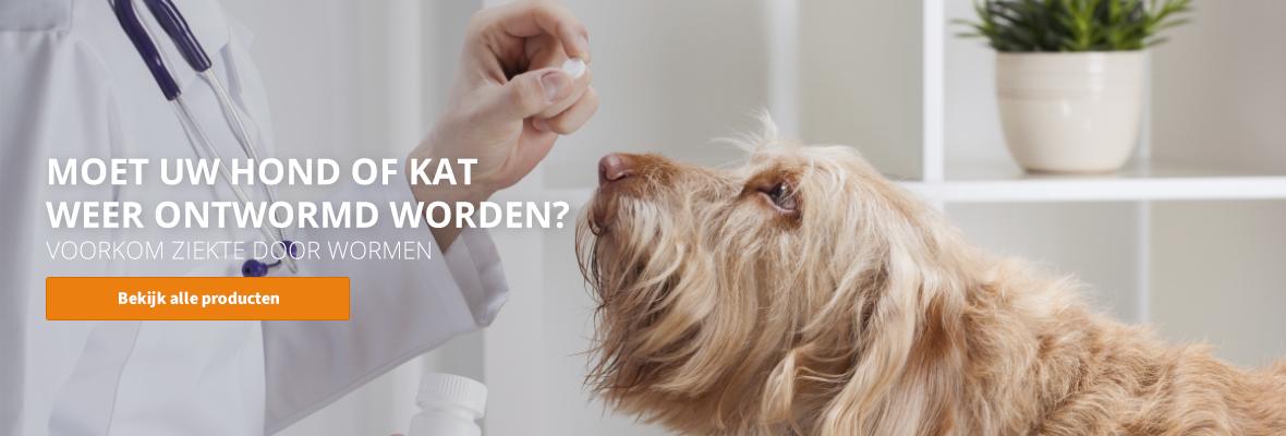 Ontwormen van uw hond of kat