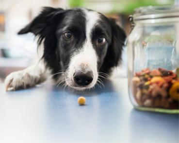 Buy your favorite dog treats
