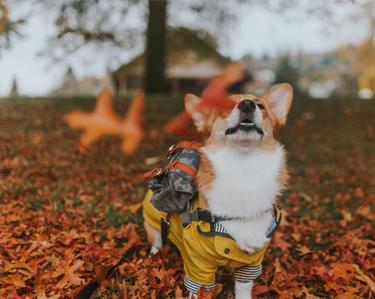 Bekijk hier ons hondenjassen assortiment!