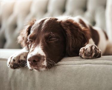 Dog Beds & Bedding