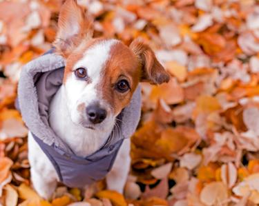 De perfecte hondenjas voor uw hond