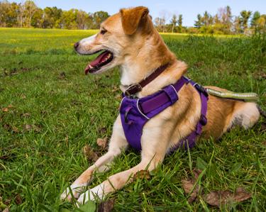 Halsbanden, riemen en hondentuigjes