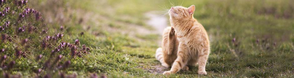 Alles gegen Flöhe und Zecken für Ihre Katze