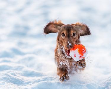 Finden Sie hier Ihr Hundespielzeug